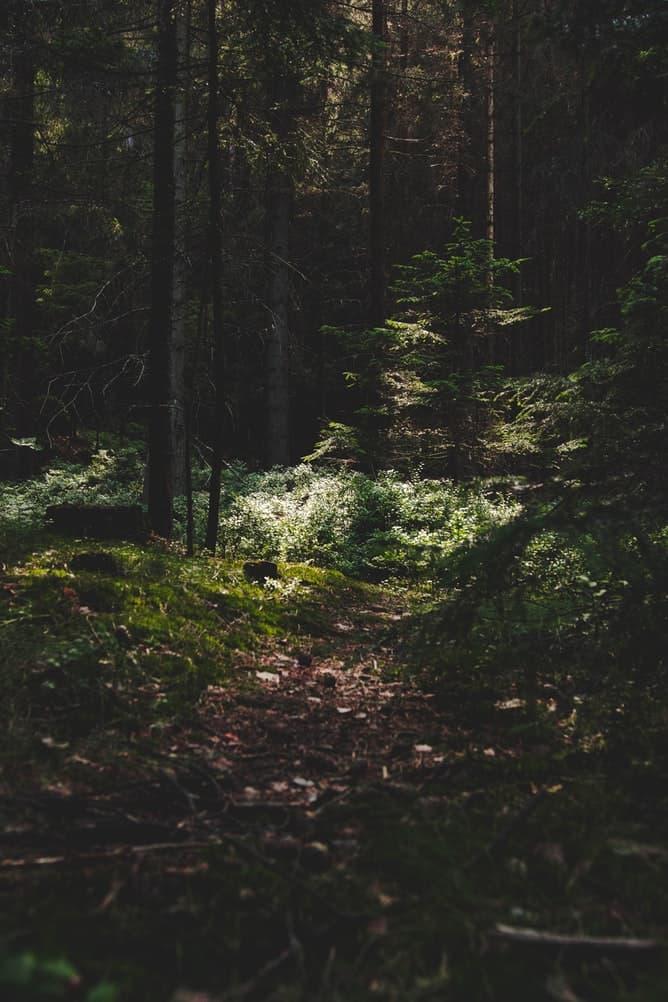 a green forest in the Czech Republic
