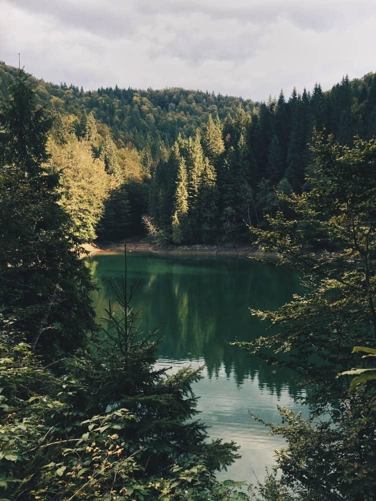 Evergreen trees in Romania