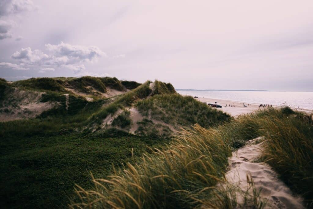 Coastline of Denmark with tall grass and sand