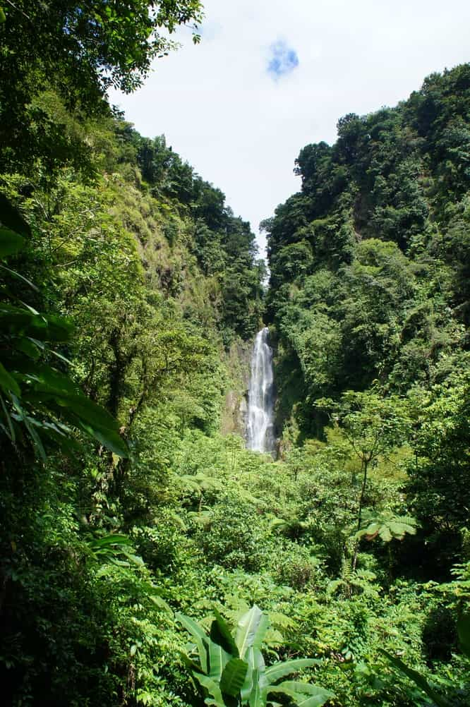 Waterfall amongst green trees in Dominica