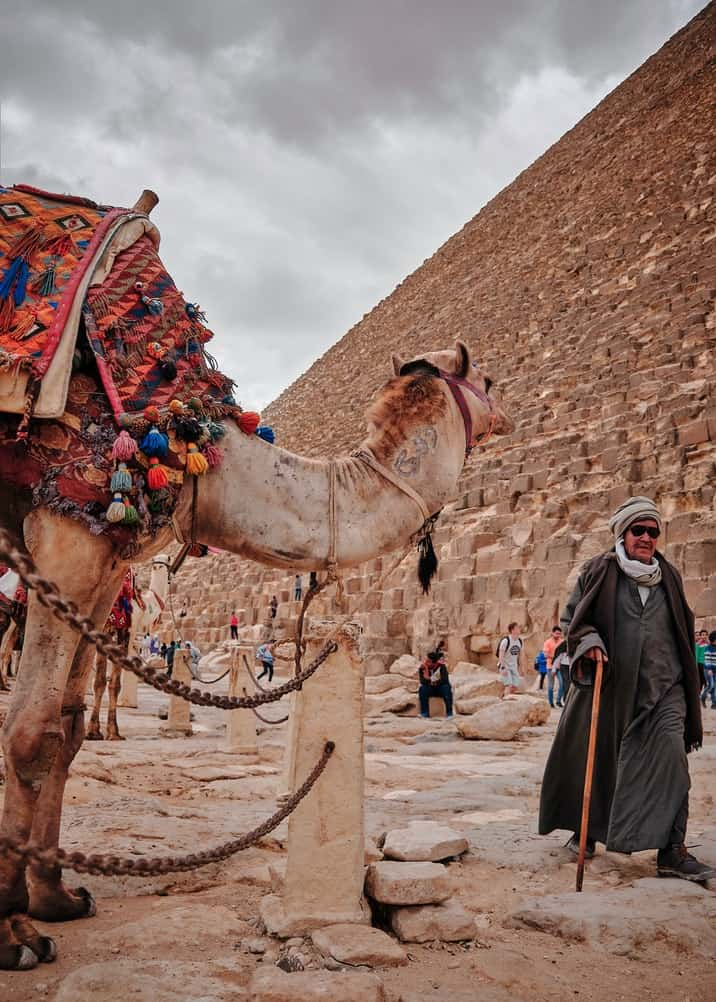 camel standing in front of a pyramid