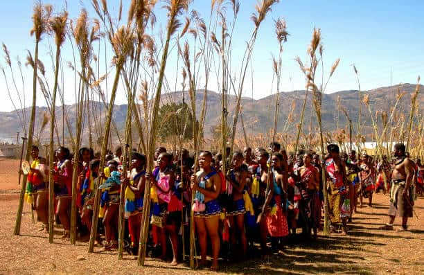 Women dancing with reeds at the Umhlanga ceremony