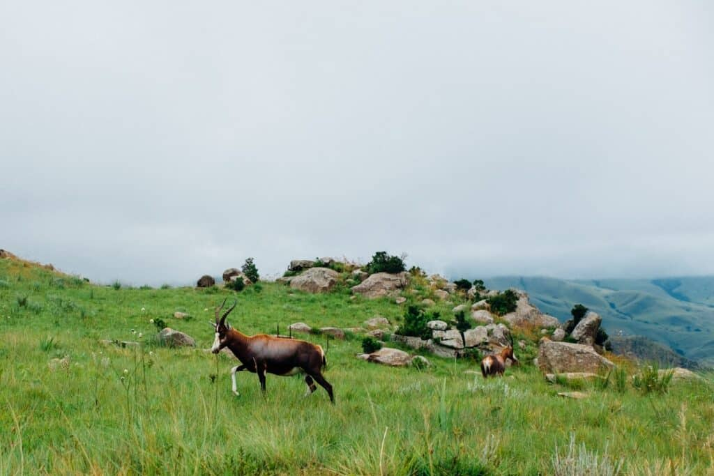 Animals on a grassy cliff with rocks.