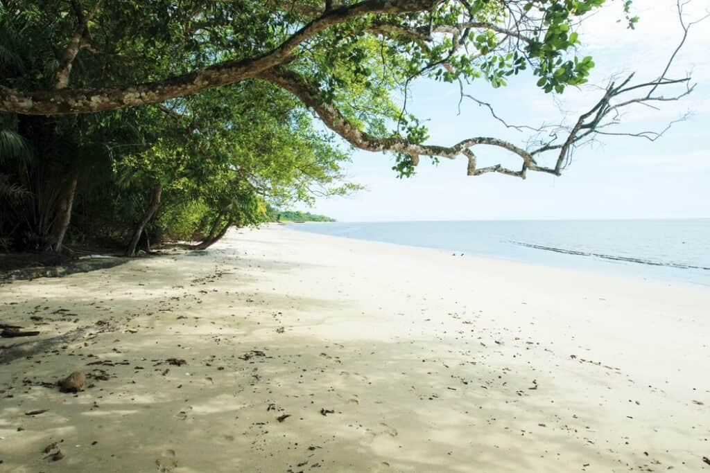 White sandy beach with green trees