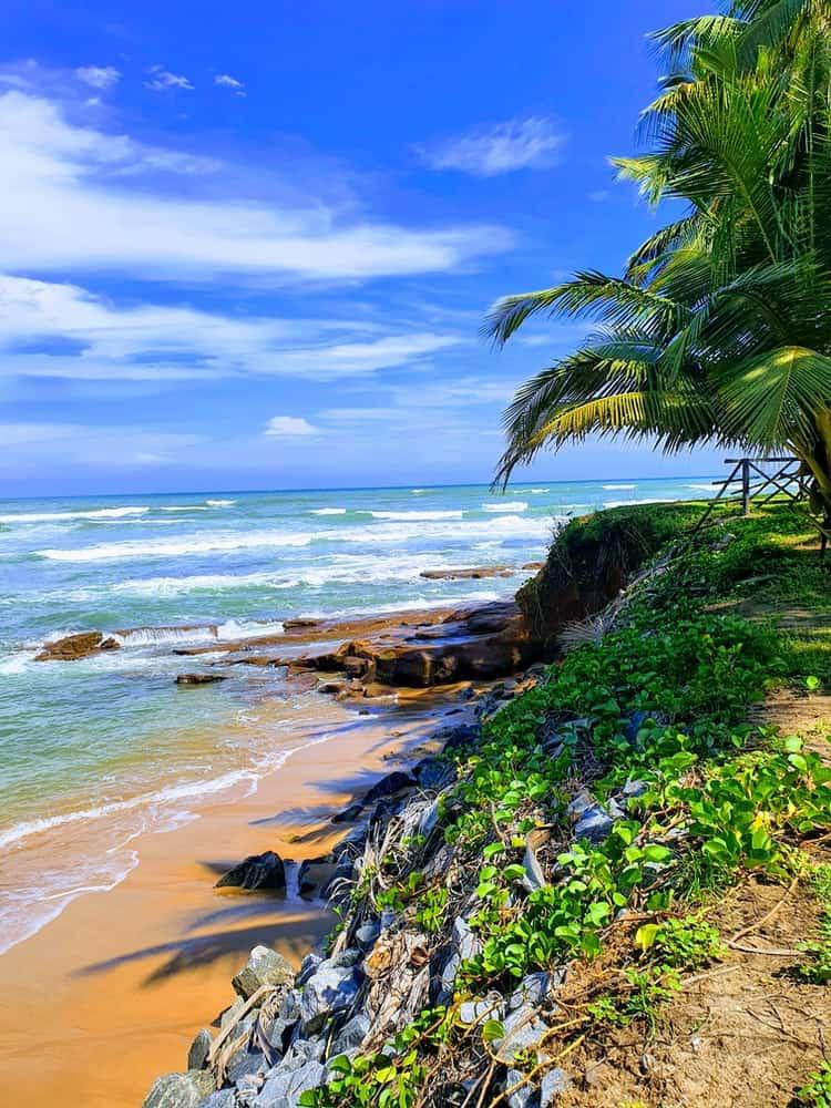 Beach with lush trees on the coast